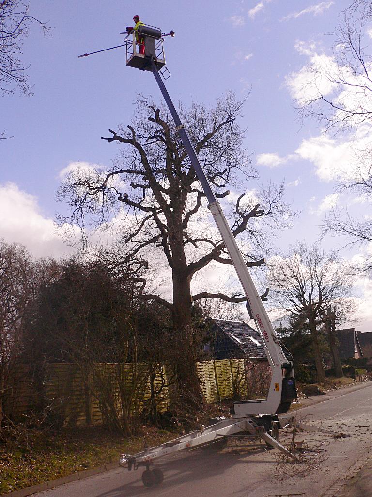 Prächtig Baumschnitt - Baumpflege -Strauchschnitt @NN_68